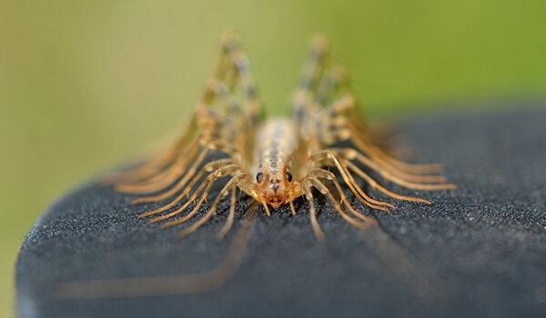 Фото: Как выглядит мухоловка