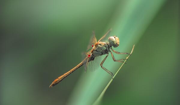 Фото: Стрекоза в природе