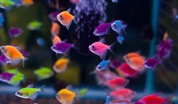 Фото: Цветная тернеция