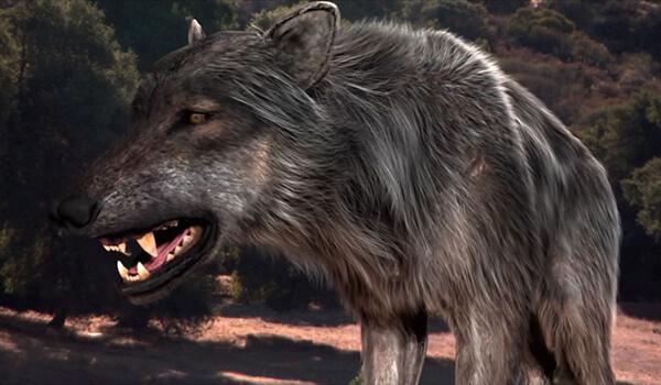 Фото: Ужасный волк
