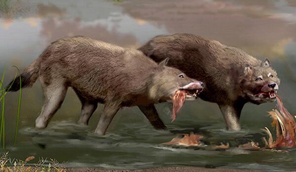 Фото: Ужасные волки