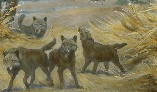 Фото: Детеныши ужасного волка