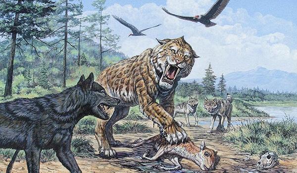 Фото: Ужасный серый волк