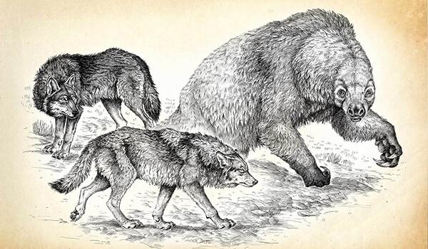 Фото: Вымершие ужасные волки
