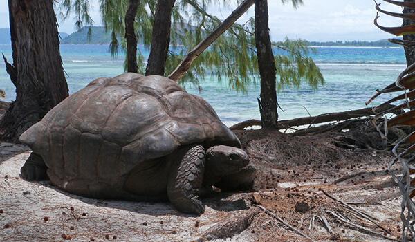 Фото: Гигантская сухопутная черепаха