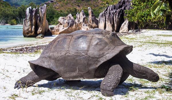 Фото: Как выглядит гигантская черепаха