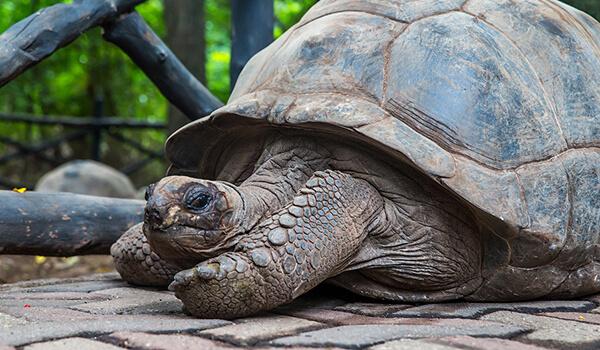 Фото: Гигантская черепаха