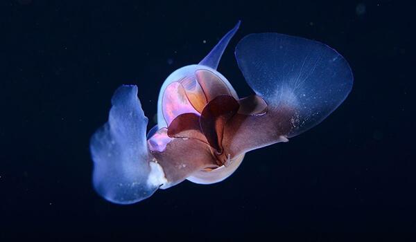 Фото: Морской ангел в море