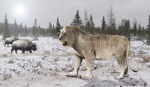 Фото: Пещерный лев