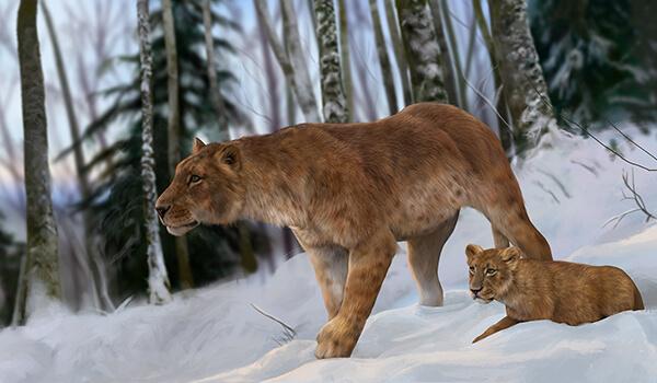 Фото: Детеныш пещерного льва