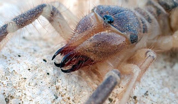 Фото: Верблюжий паук в Крыму