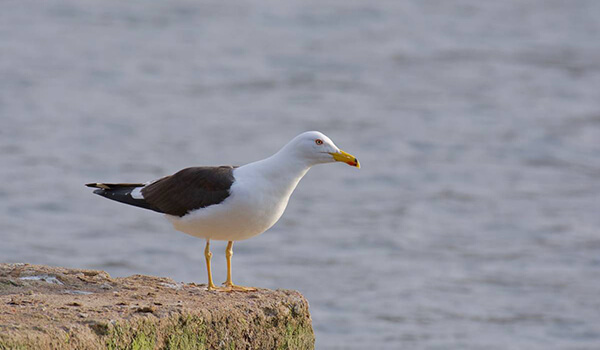 Фото: Птица клуша