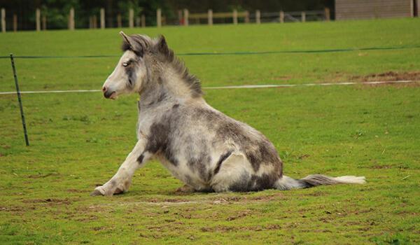 Фото: Лошак в природе