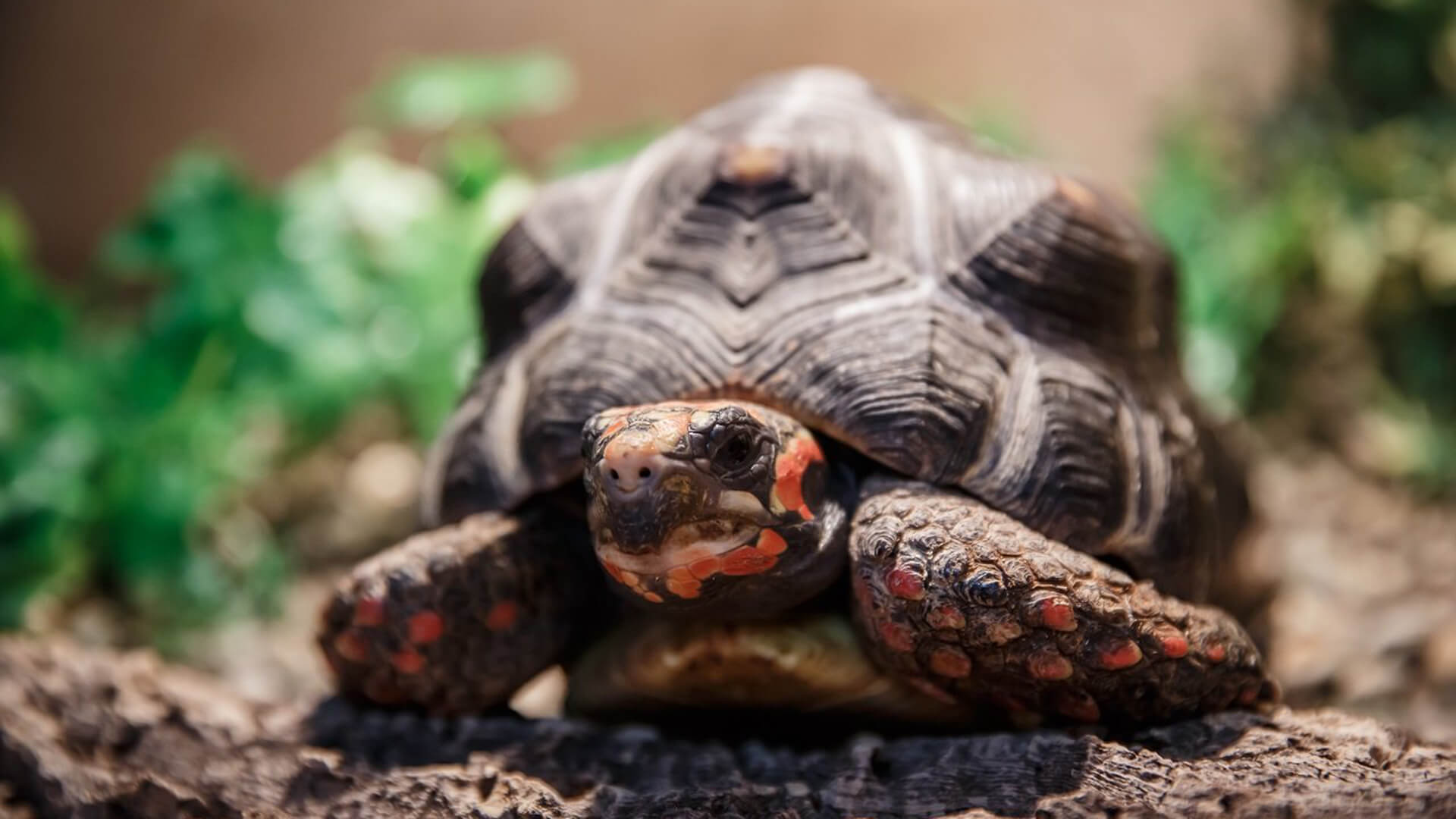 враги черепах картинки декоративную сосну