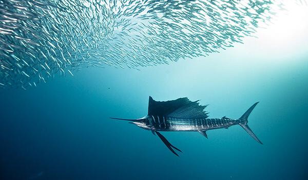 Фото: Парусник в море